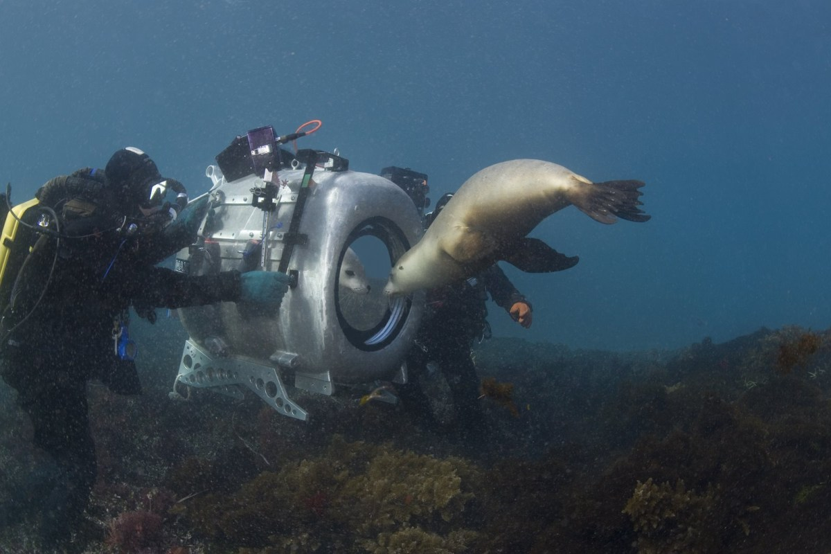 IMAX Under the Sea Behind the Scenes