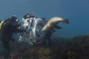 IMAX Under the Sea - Behind the Scenes photos