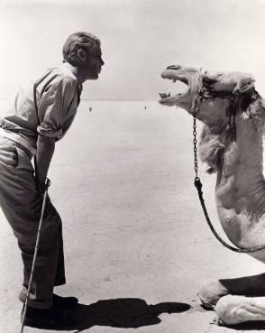 Hello Camel !